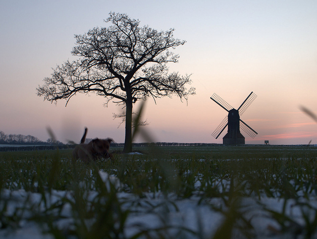 Spot the dog! (Stevington Windmill)