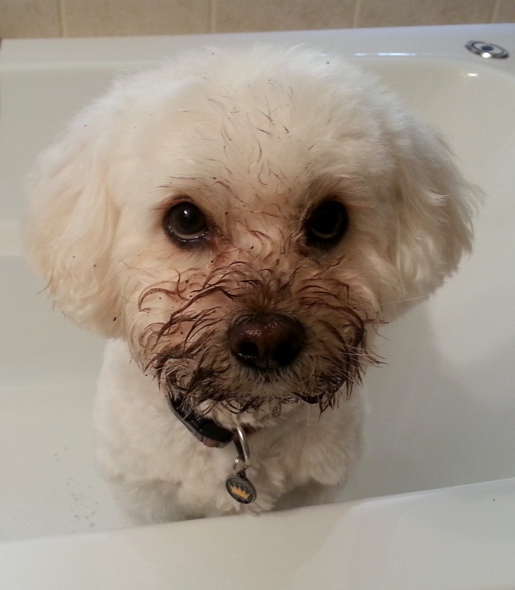 guilty looking, dirty faced boy