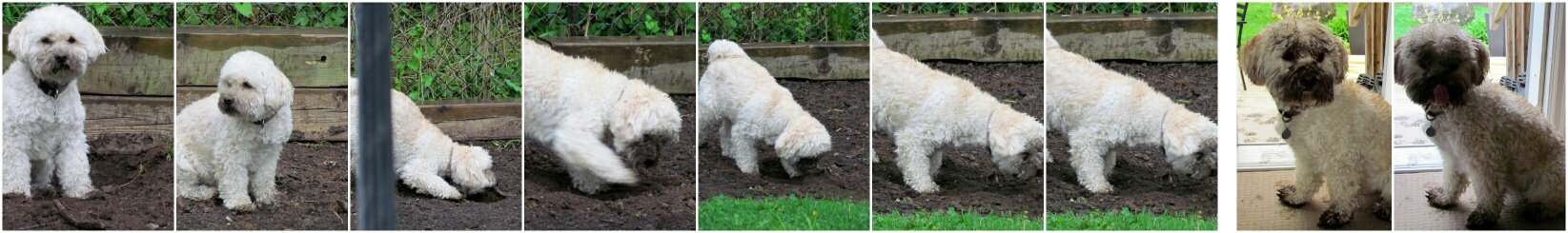 one man's compost is this dog's treasure