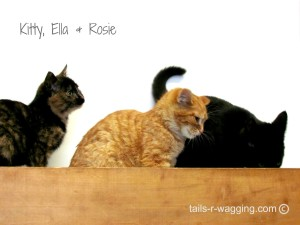 Kitty Ella Rosie