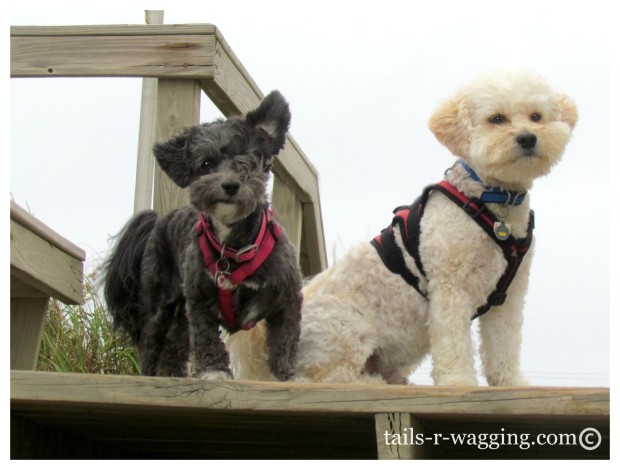 Windblown Pups