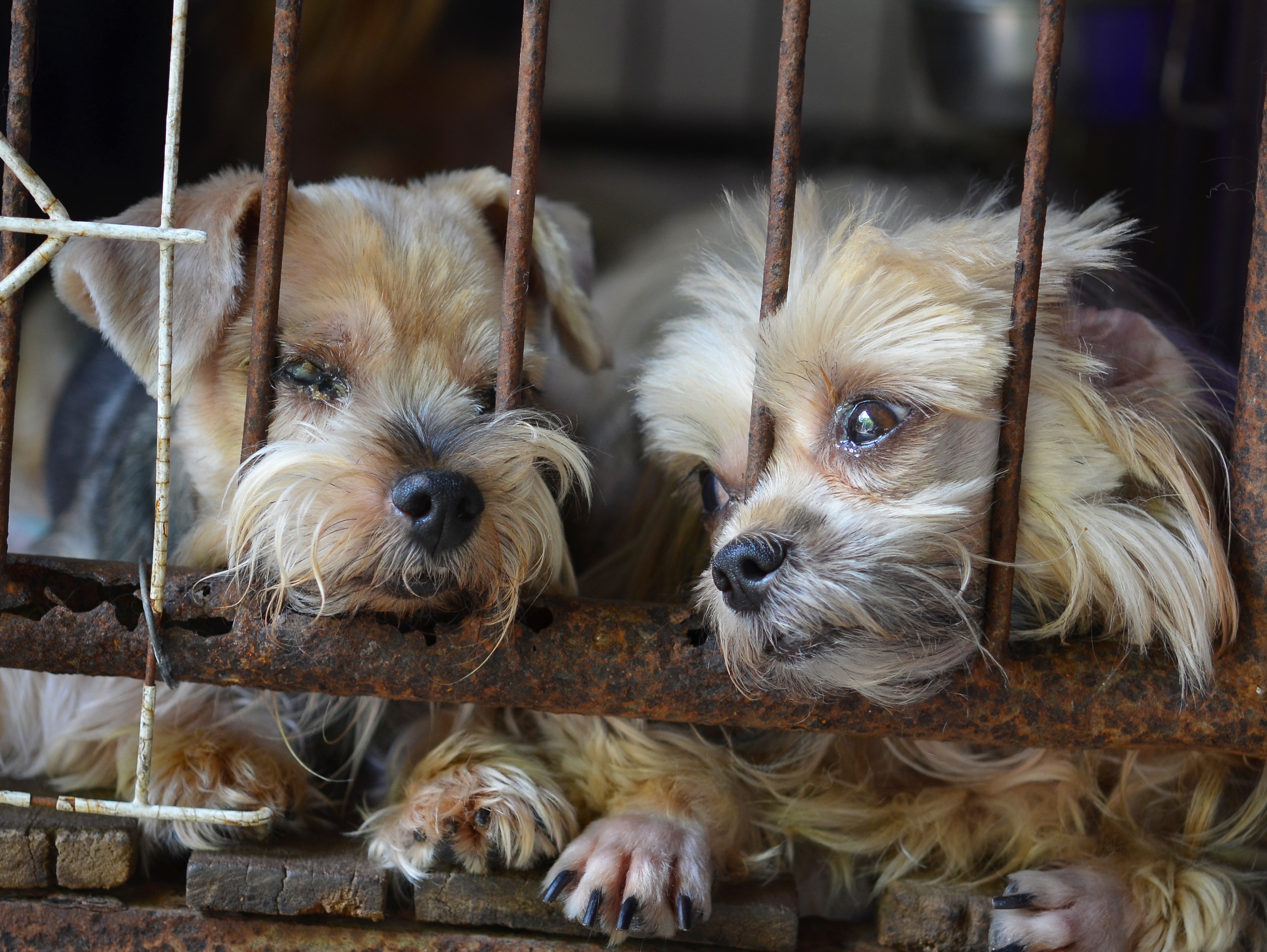 puppy mill A elderly crandon couple is accused of running a puppy mill in their home 75 year old john johnson and 70 year old jackie johnson are each charged with 14 counts of.