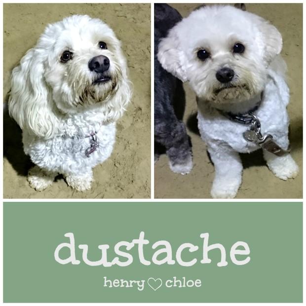 dustache