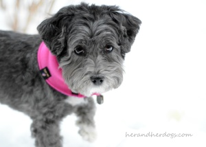 TRANSITIONAL WEAR FOR DOGS