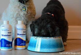 BLUESTEM ORAL CARE – #bluestempets