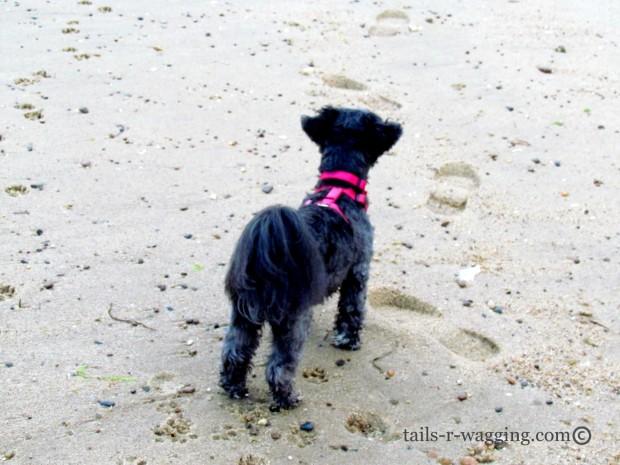 Reese on beach