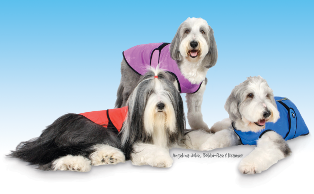 The Executive team at Must Luv Dogs