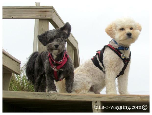 Windblown Pups