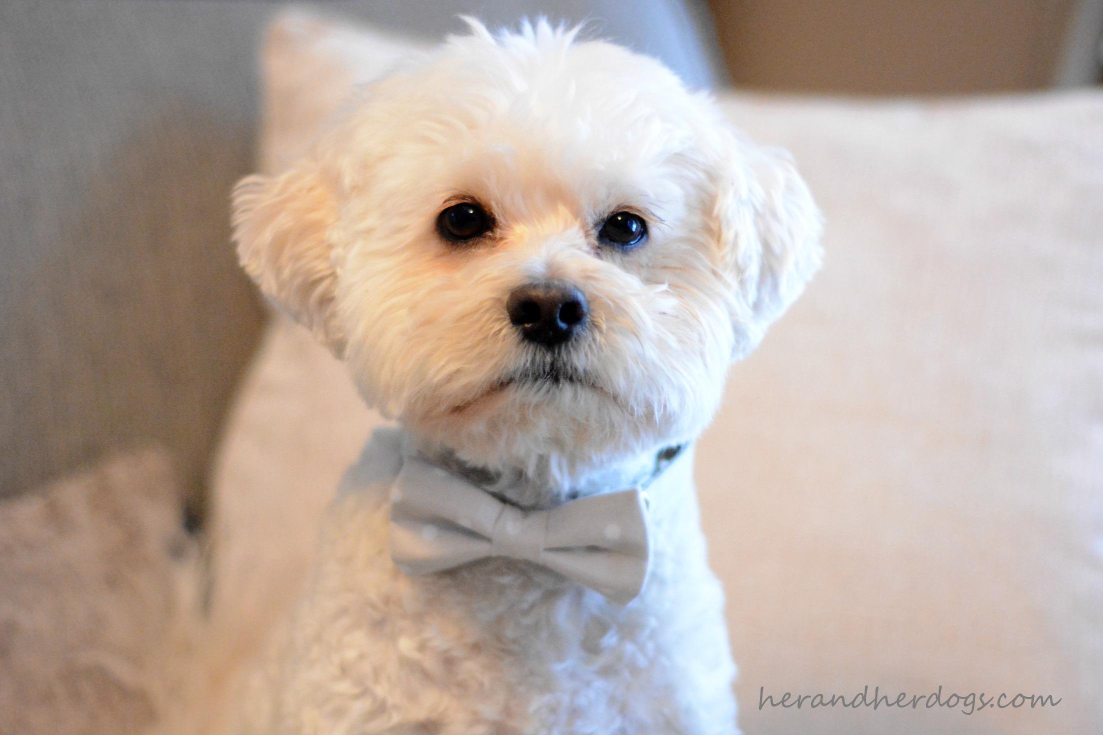 Handsome Henry