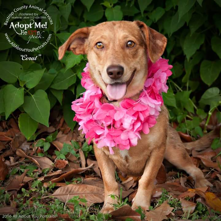Coral is being fostered by Marlene Lebel of ALL ABOUT YOU PORTRAITS